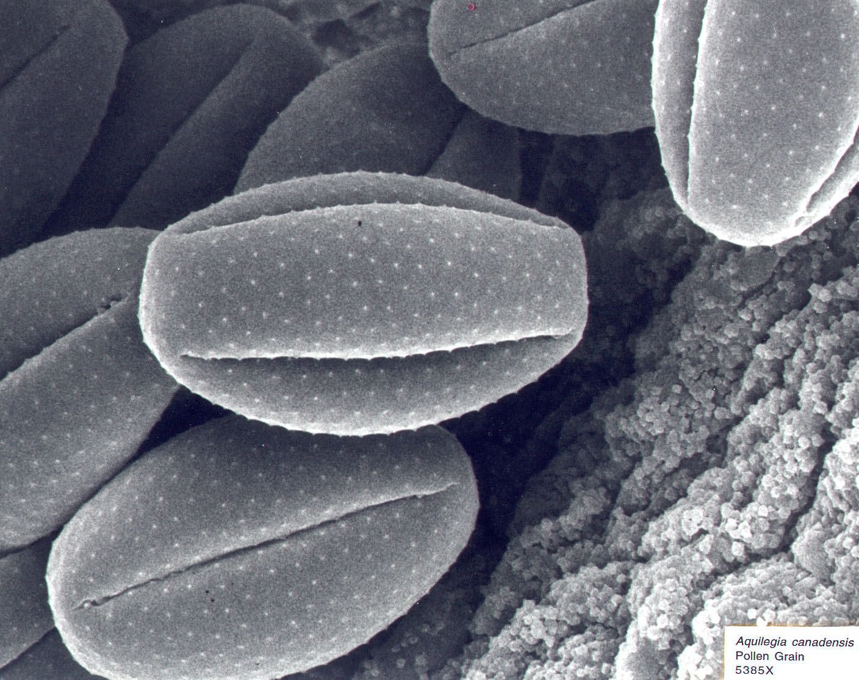 SEM Micrograph Gallery